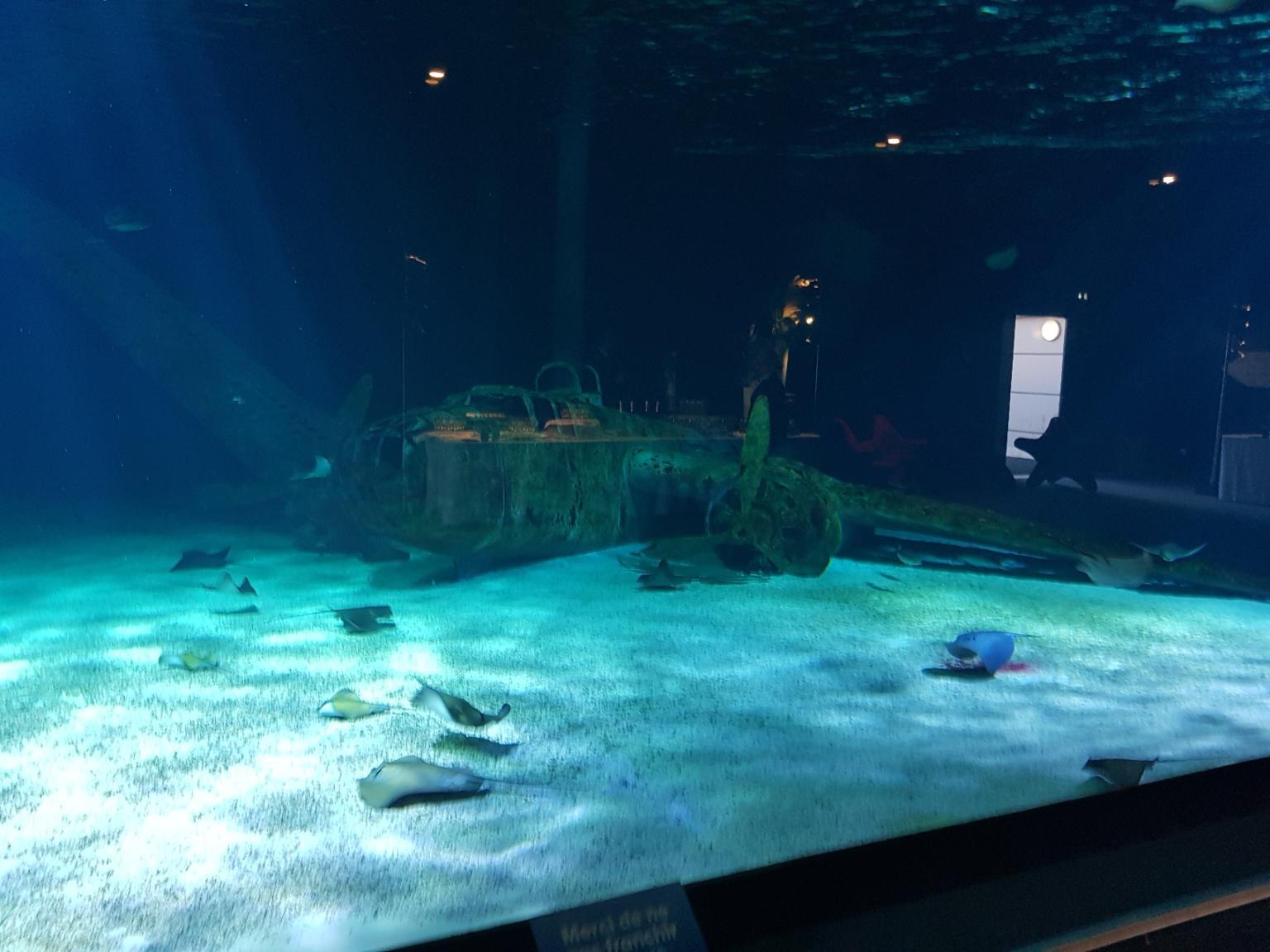 Soirée dansante à l océarium du croisic au milieu des poissons pour l université d été 2019